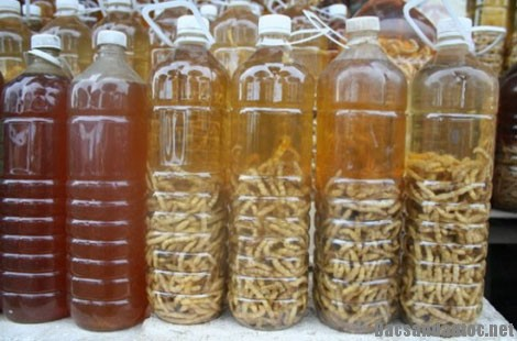 dac san ruou sau chit - Rượu sâu chít - loại thuốc bổ trong Đông y