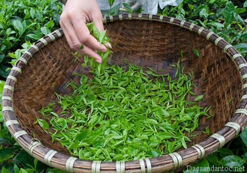 dac san ngay tet 4 - Hiệu quả thần kì từ nấm ngọc cẩu rừng