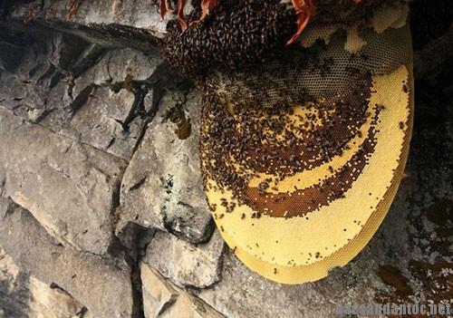 mat ong tu nhien - Những công hiệu bất ngờ của mật ong rừng nguyên chất