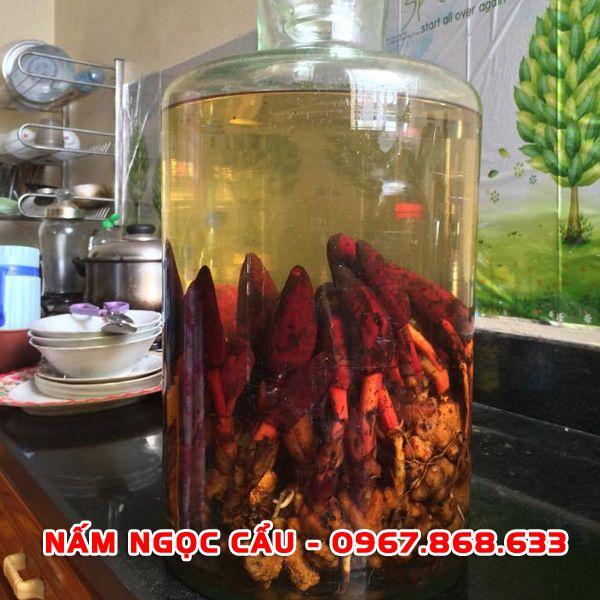 namngoccau2 - Nấm ngọc cẩu tươi