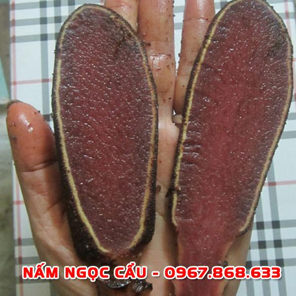 namngoccau6 - Nấm ngọc cẩu tươi