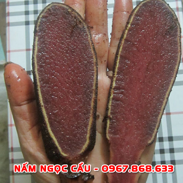 namngoccau6