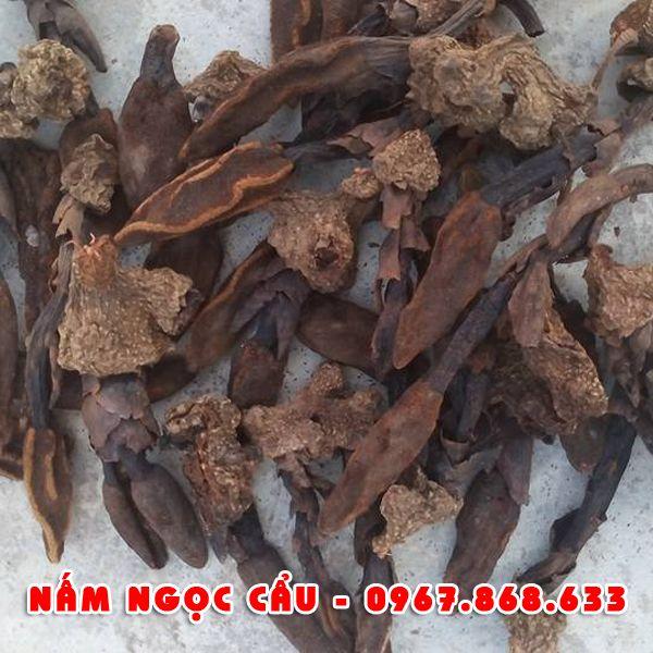 namngoncau1 - Nấm ngọc cẩu khô
