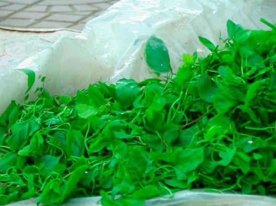 rau hoa ban1 - Top 10 món ăn nổi tiếng không nên bỏ lỡ khi du lịch Điện Biên
