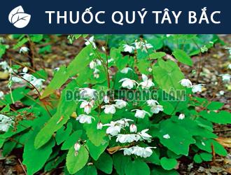 banner-thuocquytaybac