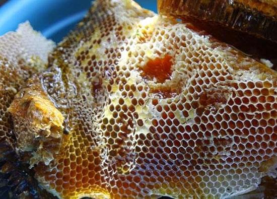 sap ong rung - Sáp tổ ong rừng
