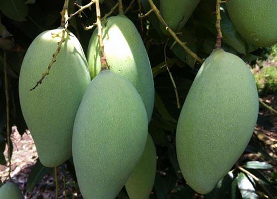 dac san dac nong 1 - Top 10 món ăn nổi tiếng không nên bỏ qua khi du lịch Đắk Nông