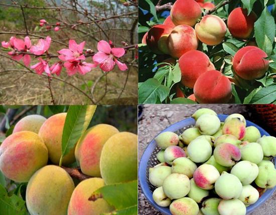 dac san lang son 9 - Top 10 món ăn nổi tiếng không nên bỏ qua khi du lịch Vĩnh Long
