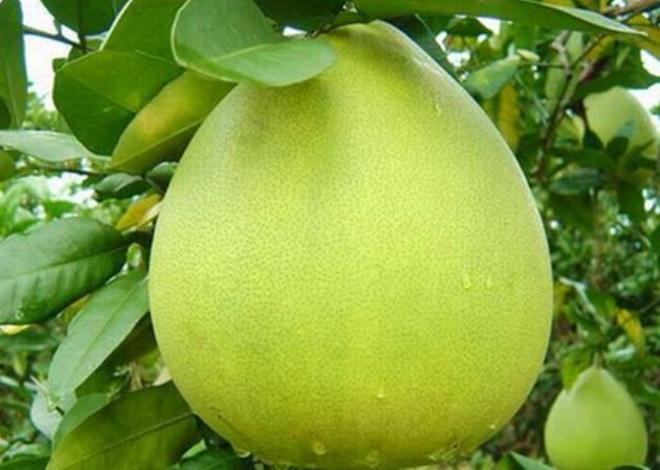 dac san vinh long 4 - Top 10 món ăn nổi tiếng không nên bỏ qua khi du lịch Vĩnh Long