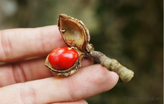 doi rung hoang lam 1 - 200g hạt dổi rừng