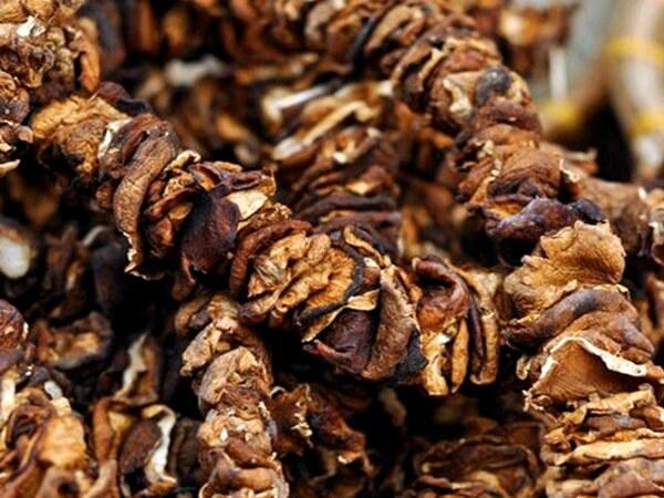 nấm hương rừng sapa