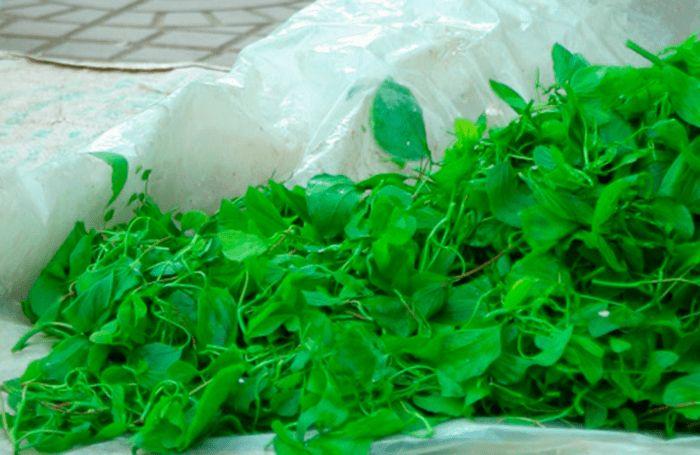 Đặc sản rau hoa ban Điện Biên