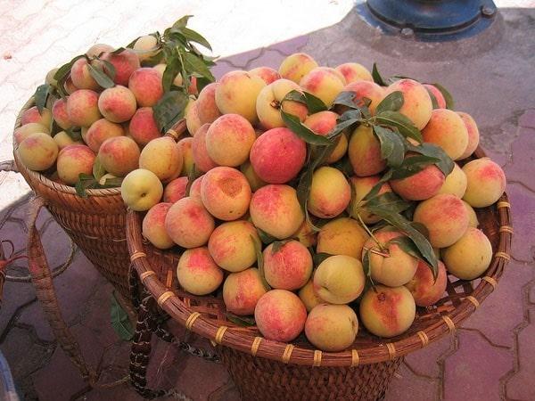 8 loai hoa qua dam chat nui rung o lao cai 1 - 8 loại hoa quả đậm chất núi rừng ở Lào Cai
