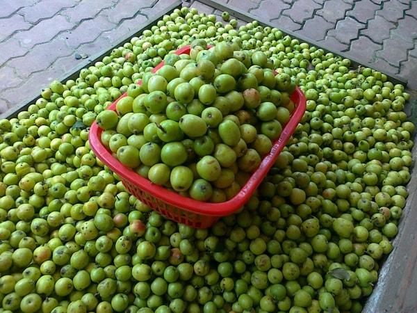 8 loai hoa qua dam chat nui rung o lao cai 4 - 8 loại hoa quả đậm chất núi rừng ở Lào Cai