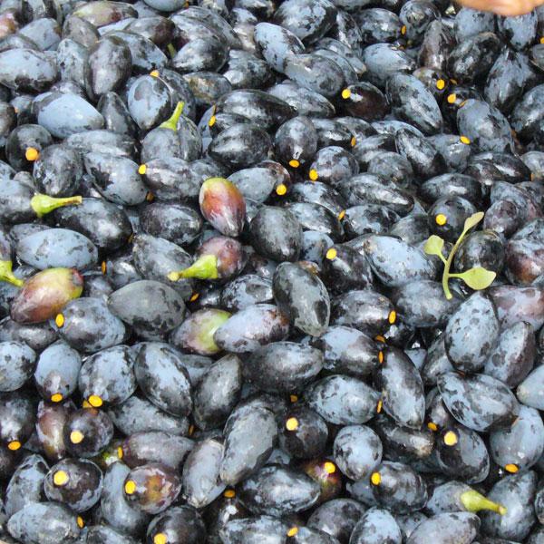8 loai hoa qua dam chat nui rung o lao cai 6 - 8 loại hoa quả đậm chất núi rừng ở Lào Cai