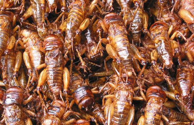 Mang toàn côn trùng chế biến thành đặc sản thế này, người Yên Bái cũng tài tình lắm chứ đùa - Ảnh 2.