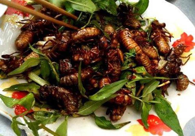 luu ban nhap tu dong 2 - Những  món ăn độc đáo từ côn trùng của người Yên Bái