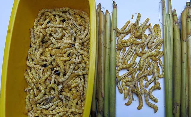 unnamed file 5 - Những món ăn ngon nổi tiếng ở Điện Biên