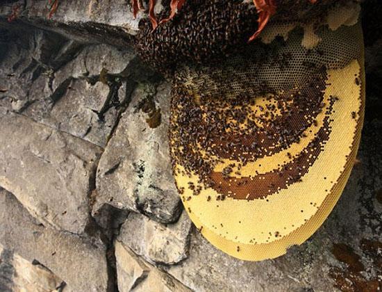 cach ngam ruou mat ong ngon nhat 1 - Cách ngâm rượu mật ong ngon nhất