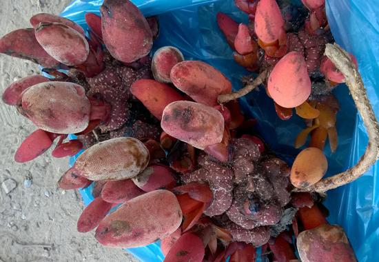 dai li ban nam ngoc cau rung chat luong tai ha noi - Đại lí bán nấm ngọc cẩu rừng chất lượng tại Hà Nội