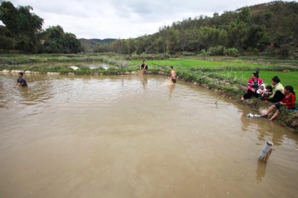 goi ca dai khach quy cua nguoi thai o dien bien - Cách sử dụng nấm ngọc cẩu rừng hiệu quả