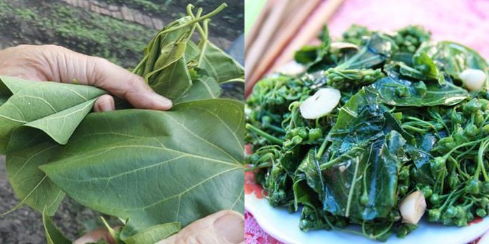 kham pha dac san la ngon xao toi dac san cua nguoi dan lai chau 2 - Khám phá đặc sản lá ngón xào tỏi đặc sản của người dân Lai Châu