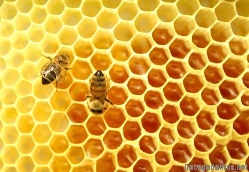 nhung cong hieu bat ngo cua mat ong rung nguyen chat 2 - Những công hiệu bất ngờ của mật ong rừng nguyên chất