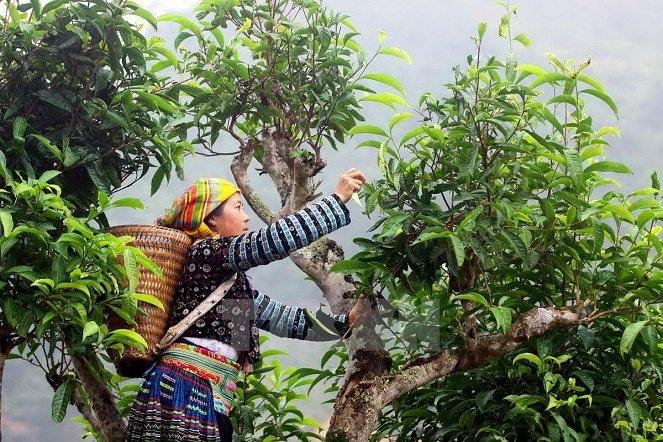 nhung dac san noi tieng tai dien bien – ngon nhat dien bien phu 17 - Những đặc sản nổi tiếng tại Điện Biên – ngon nhất Điện Biên Phủ